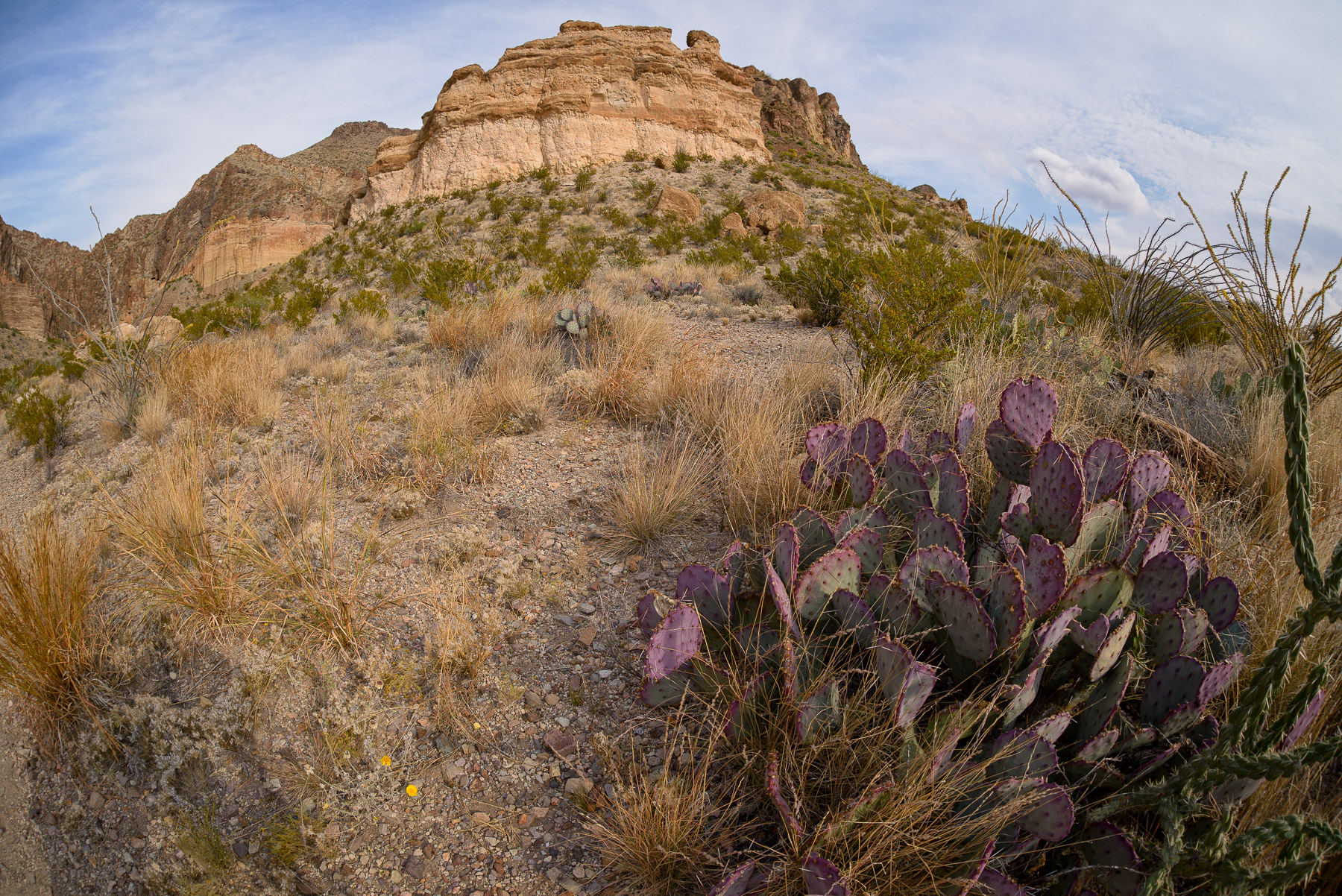 big bend-_D6H4526-ExtEd
